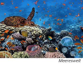 Meereswelten